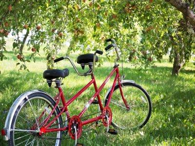 Noleggio di biciclette tandem a tempo pieno
