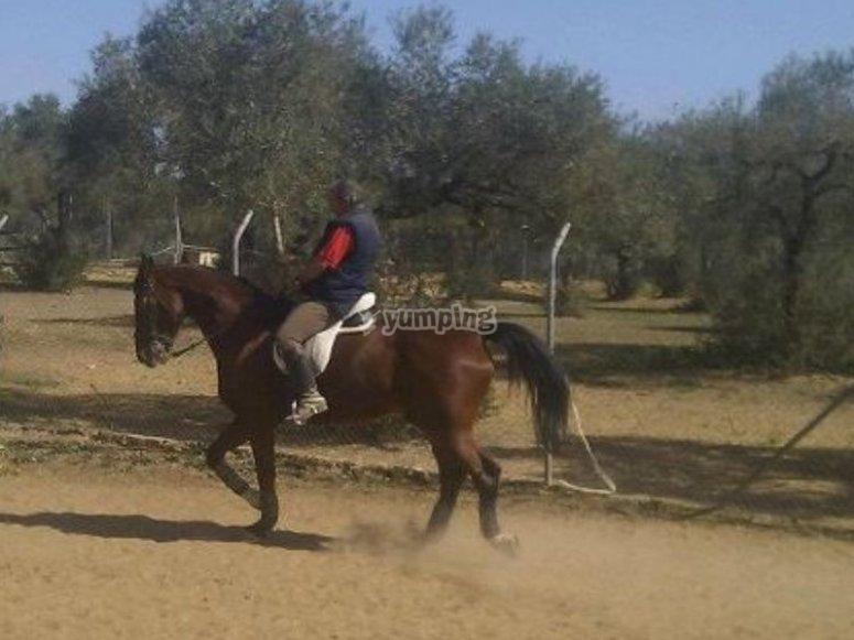 多纳纳(Donana)的骑马