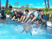 Interactuando con delfines