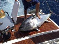 Un enorme atún