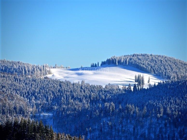 Snow tracks in the sierra