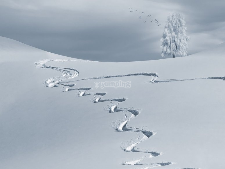 pista pisada para esquiar