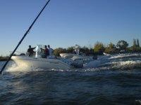 访问的青鱼副本埃布罗河三角洲钓石斑鱼