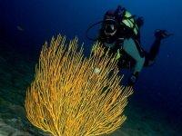 Divisa la flora subacuática