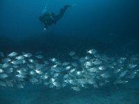 Bucea entre bancos de peces