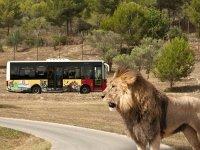Safari en bus