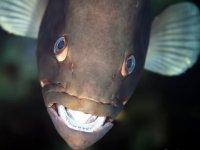 Animales de las profundidades