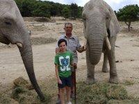 nunca has estado tan cerca de los elefantes