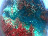 Enamórate de las coloridas profundidades de Plentzia