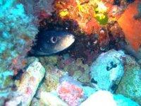 Conoce especies marinas