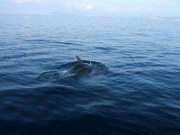 Naturaleza marina