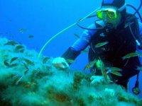 Bucea en el Mediterráneo