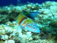 pez verde zoom