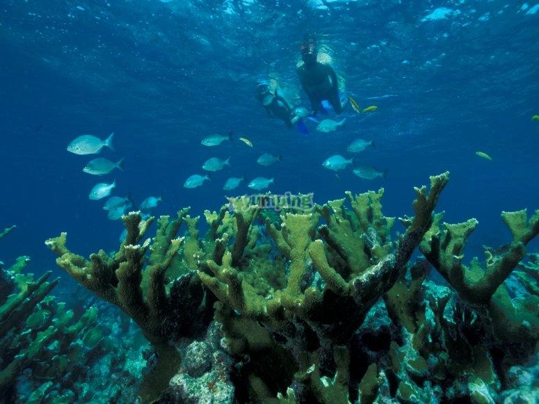 Snorkel Islas Medas