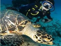 Diving with the turtle