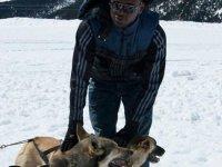 Musher con perros