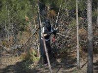 Entre las ramas del bosque