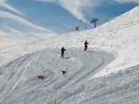 在雪地与狗标志的雪瓦尔诺德