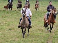 grupos de caballos