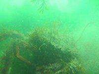 Species hidden in the environment