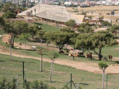 Terra Natura Murcia Parques Zoologicos