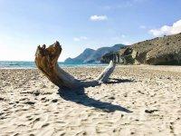 Tronco en la playa almeriense