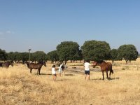 Ninos entre los caballos