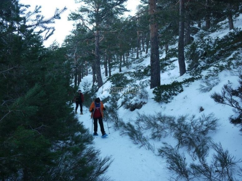 Snowshoes route in Navacerrada