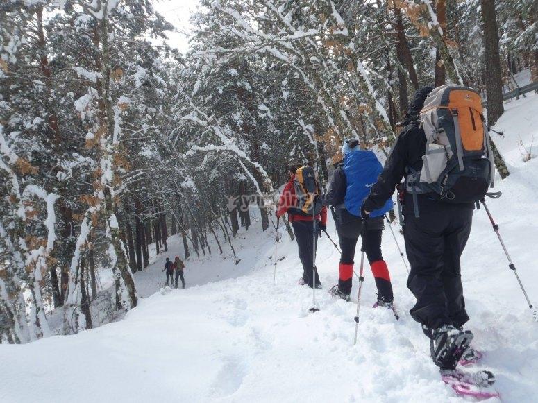 Paseo con raquetas de nieve por Navacerrada