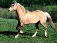 Equinos de lo más bellos