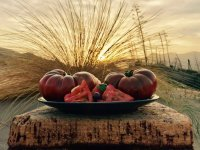 Plato de tomates autoctonos