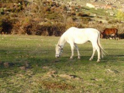 Clase de equitación de 1 hora Madrid
