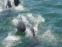 Delfines en nuestro avistamiento
