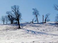穿着雪鞋雪的树木