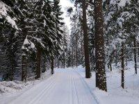 Snowy road between fir trees