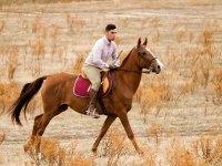 Horse-rider symbiosis
