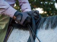 Simbiosis entre caballo jinete