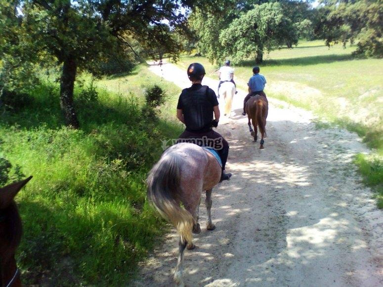 Paseando con los caballos entre la arboleda