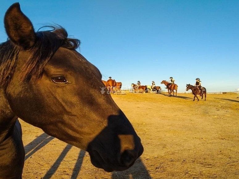 Ruta familiar con los caballos