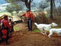 Caza con perros