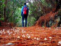 Contemplando el sendero en La Palma