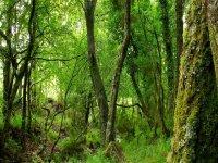 passaggio attraverso la foresta