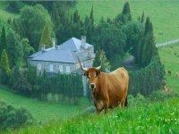 ruta por el prado