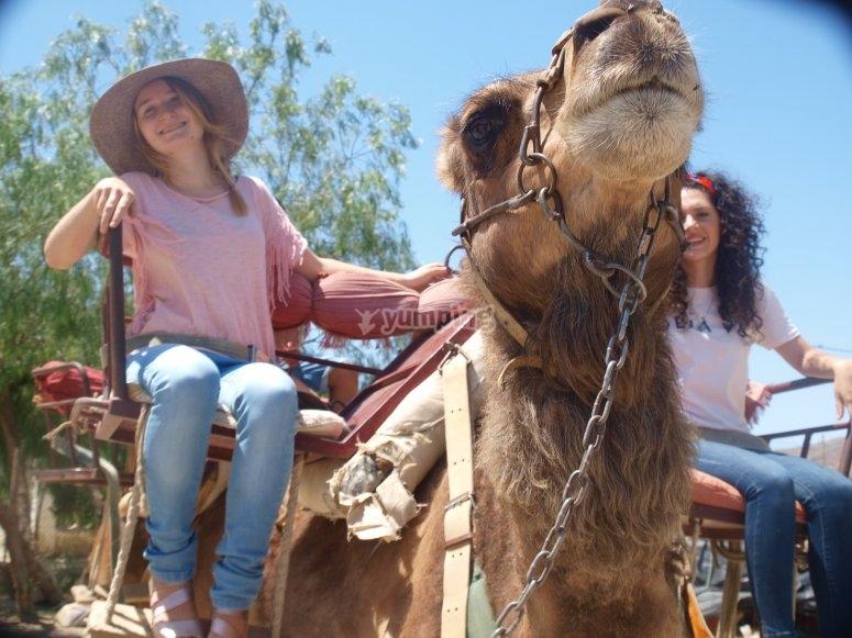 Paseo en camello para dos