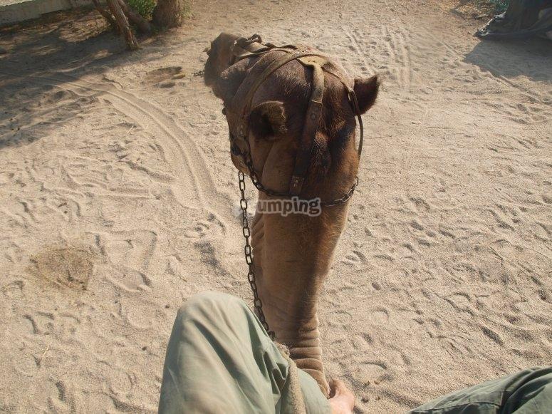 Foto desde lo alto del camello