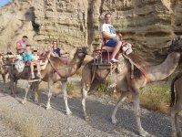 Paseo en camello 35 minutos, Tarifa adultos