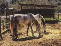 Horses well cared for