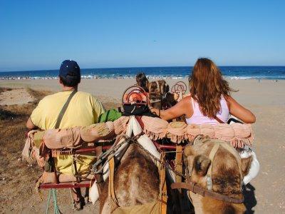 Camel ride 35 min, Children's offer