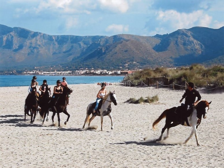 Passeggiata invernale con cavalli lungo la spiaggia
