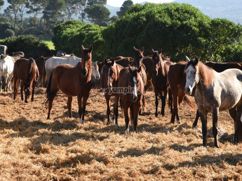 La nostra famiglia di cavalli